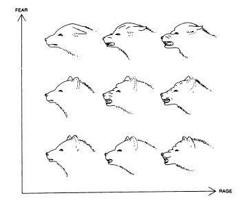126 - Диаграммы и графики: осмысляя Тафти