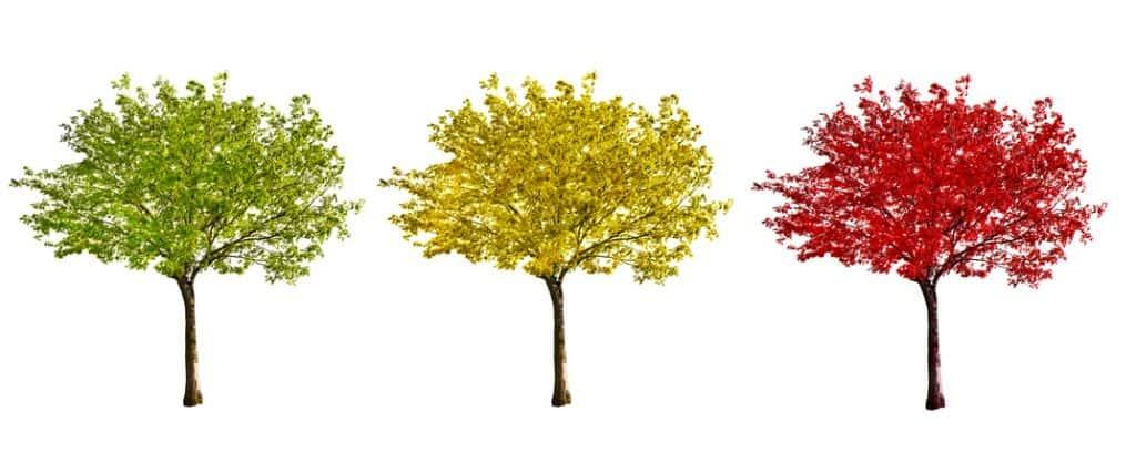 0 tree 1024x427 - Использование деревьев решений в задачах прогнозной аналитики