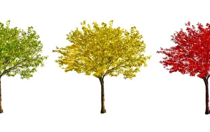0 tree 700x441 - Использование деревьев решений в задачах прогнозной аналитики