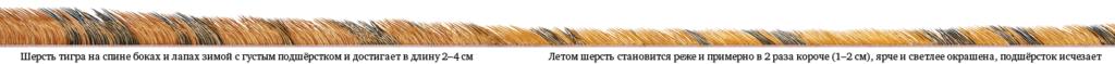 tiger fur 2x 1024x59 - Алгоритм Δλ: визуальные элементы