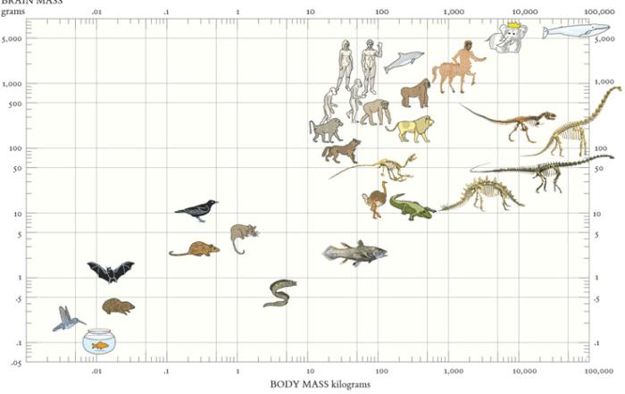 tufte animals 700x441 - Алгоритм Δλ: каркас визуализации и виды осей