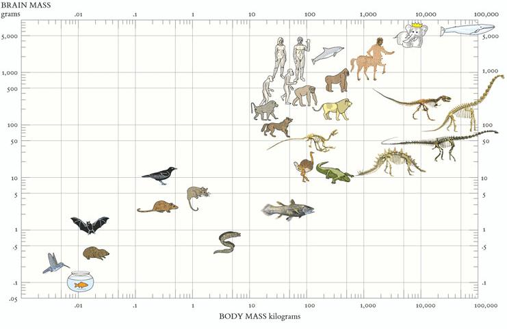 tufte animals - Алгоритм Δλ: визуальные элементы