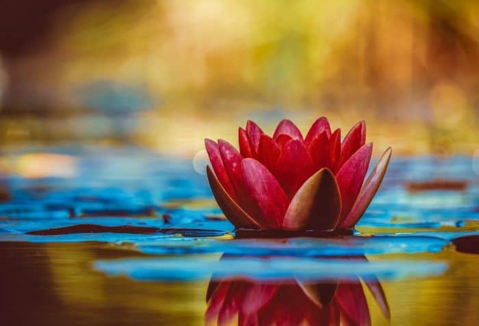 selective focus photography of red waterlily flower in bloom 2302908 e1581591173368 - Анализ временных рядов